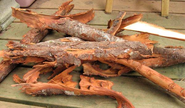Red Alder Bark - Home Remedies for Hives