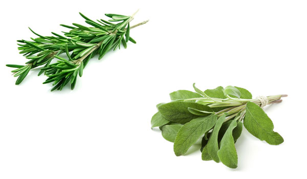 Rosemary and Sage - Home Remedies for Premature Graying of Hair
