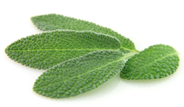 Sage - Home Remedies for Foot Odor
