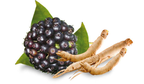 Siberian Ginseng - Home Remedies to Reduce High Creatinine Levels