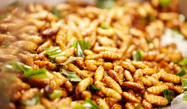 Silkworm Pupae - Home Remedies for Fatty Liver Disease