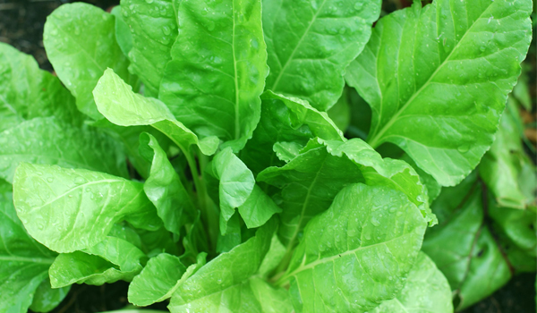 Spinach - Home Remedies for Cataracts