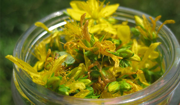St. John's Wort - Home Remedies for Premenstrual Syndrome