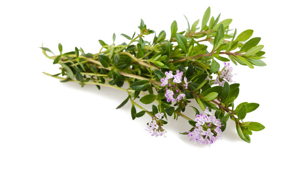 Thyme - Home Remedies for Numbness in Hands and Feet