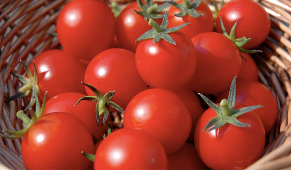 Tomatoes counter the effect of cigarette smoke - Health Benefits of Tomatoes