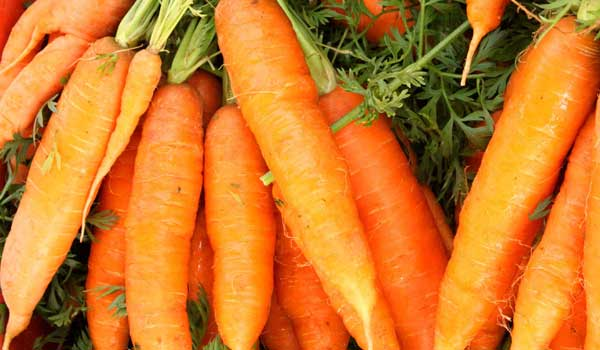 Immunity - Health Benefits of Carrot