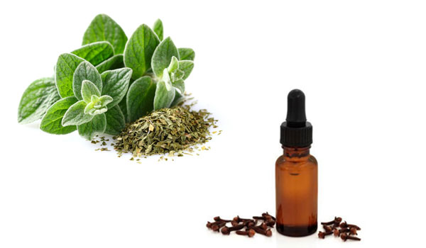 Clove and Oregano - Home Remedies for Tooth Decay and Cavities
