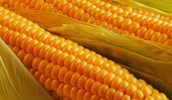 Weight Gain - Health Benefits of Corn