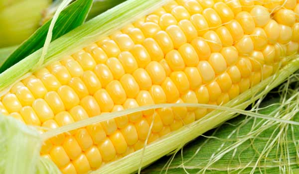 Anemia Prevention - Health Benefits of Corn