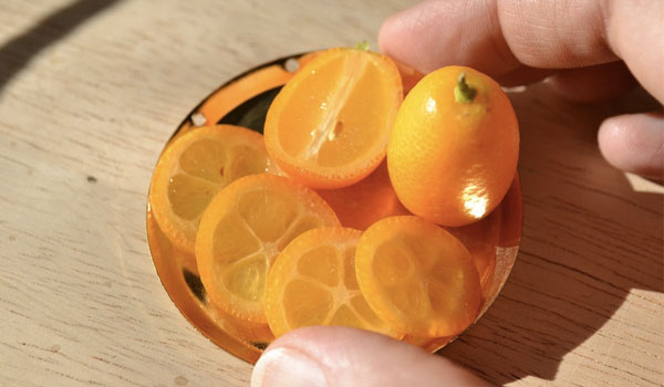 Kumquats good for hair - Health Benefits of Kumquats