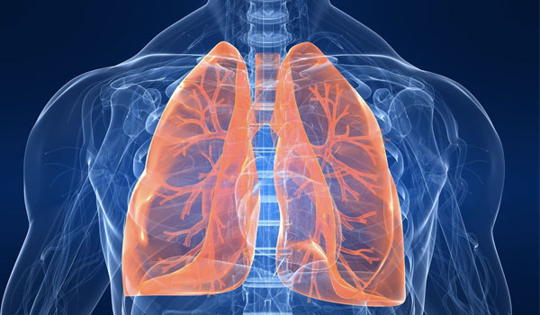 Lung Health - Health Benefits of Squash