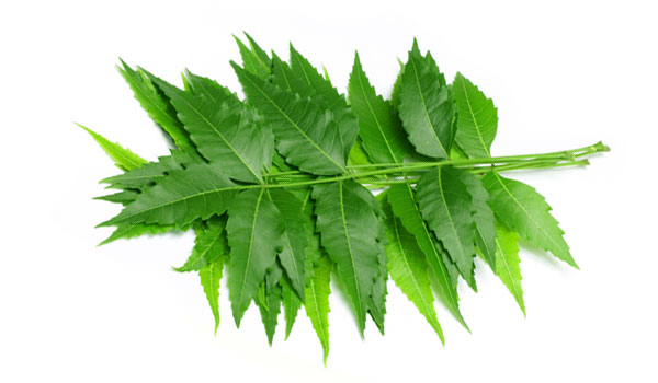 Neem - Home Remedies for Minor Cuts and Grazes