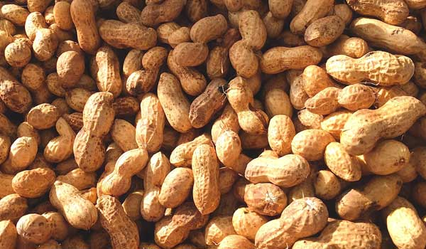 Stomach - Health Benefits of Peanuts