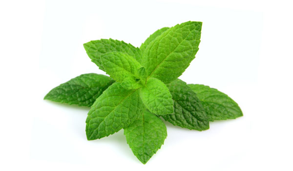 Peppermint - Home Remedies to Reduce Body Heat