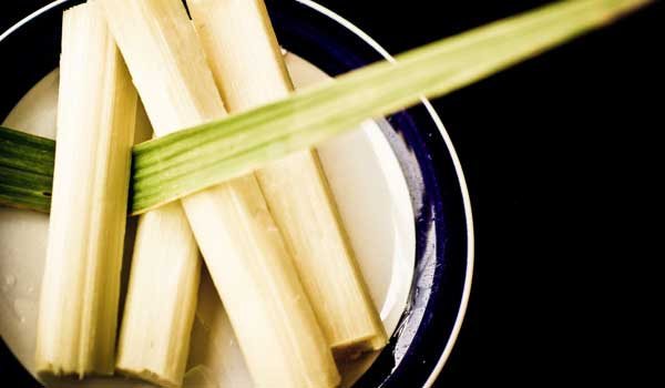 Cancer - Health Benefits of Sugar Cane