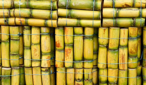 Hydration - Health Benefits of Sugar Cane