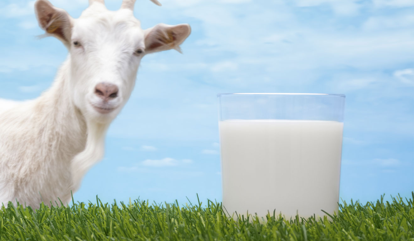 Image result for goat milk