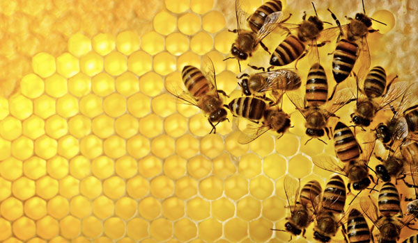 Honey - Home Remedies for Scalp Acne