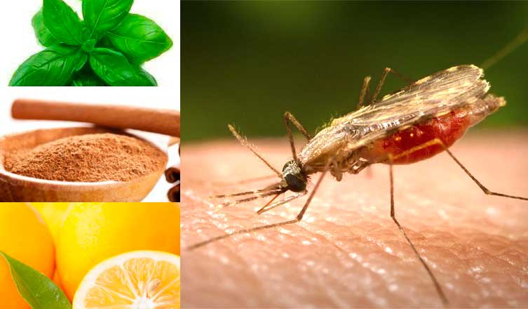 How to Treat Malaria Naturally
