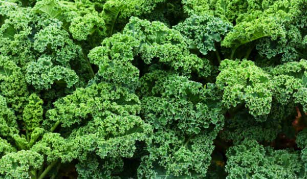 Kale- How to Treat Scoliosis