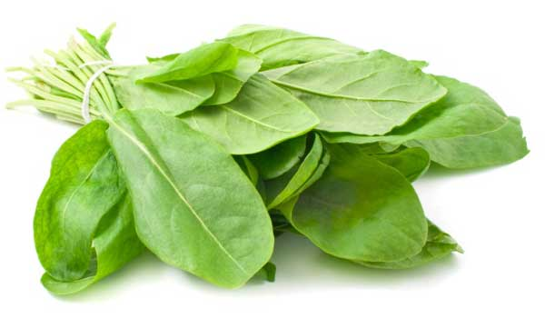 sorrel-leaves-home-remedies-for-goiter