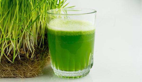 Wheatgrass - How To Control Uric Acid Levels